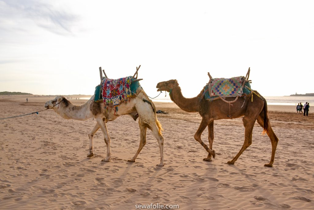 Morocco travels